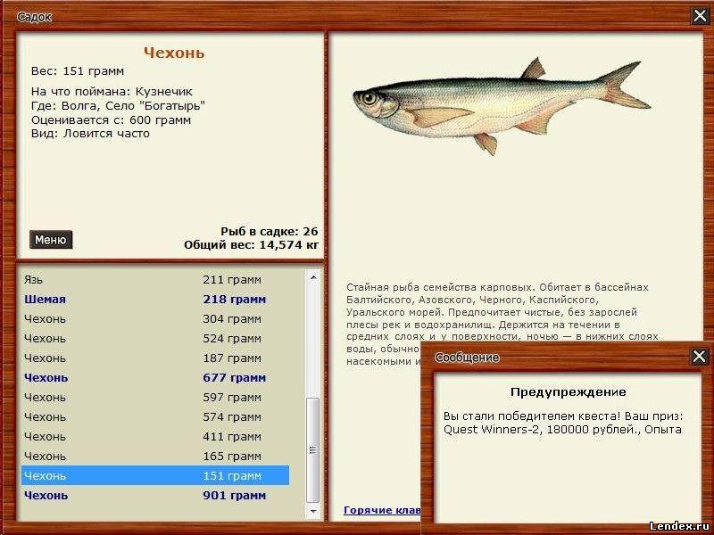 чехонь-русская рыбалка 3