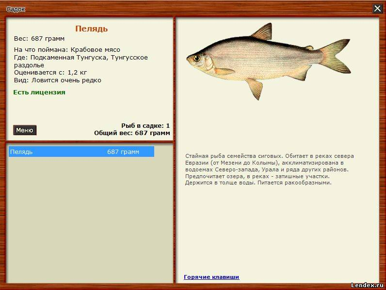 какая рыбина ловится получи какую наживку