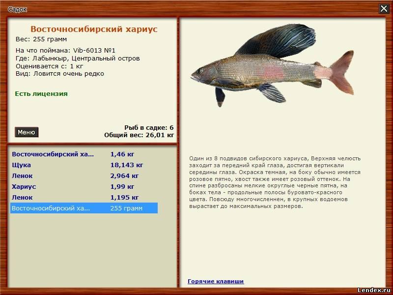 как поймать рыбу там где ее нет
