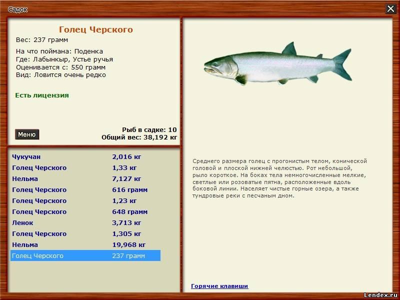 голец черского рыбалка