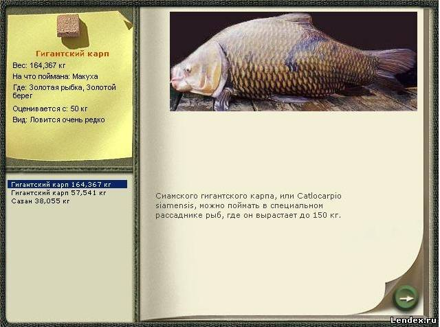 рыбалка линь карась сазан