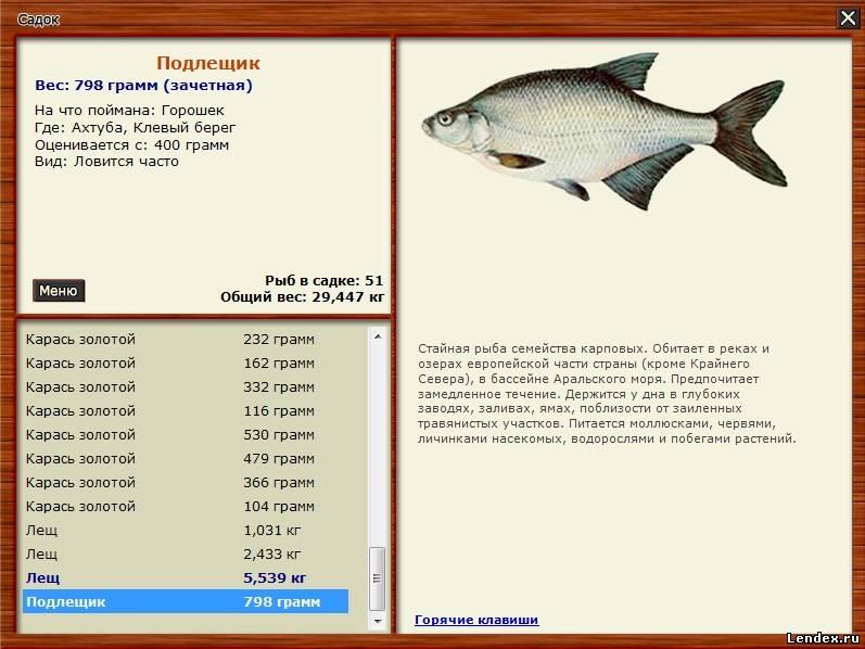 на что ловится сом на москва реке рыбалка 3