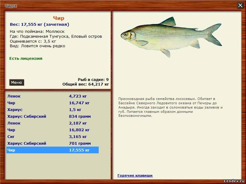 на чего клюет рыба на какие наживки