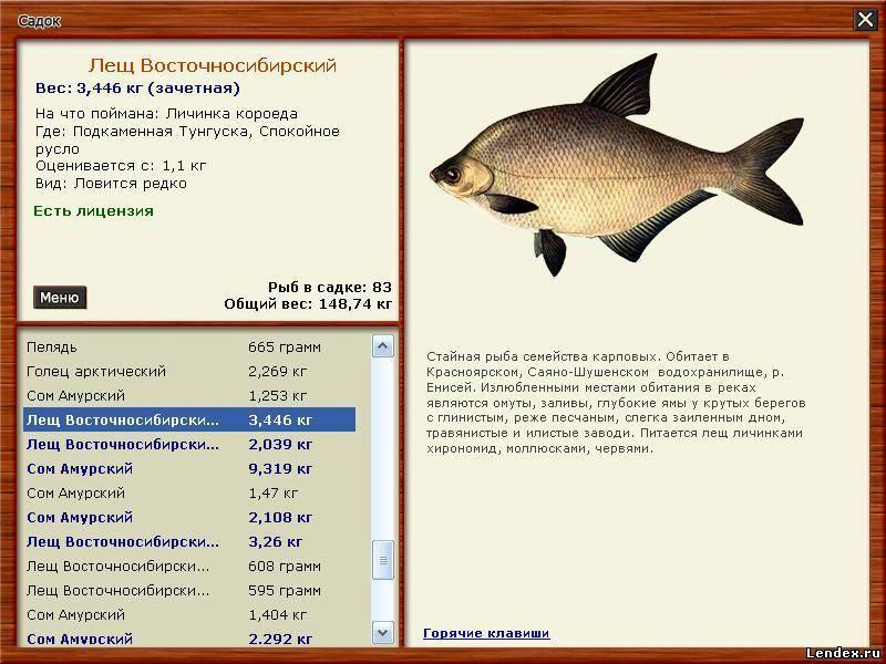 где купить лицензию на ловлю рыбы в красноярске