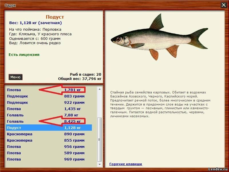 на что ловят рыбу в новороссийске