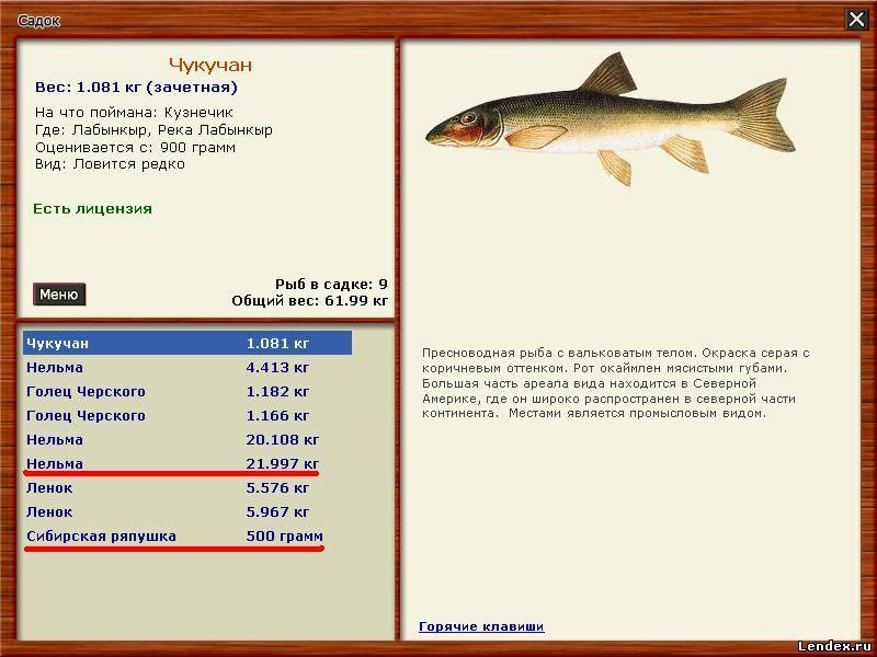 на какую наживку ловить рыбу на речке