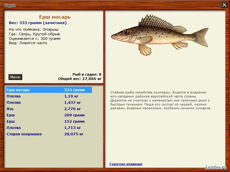 на что лучше клюет рыба в это время
