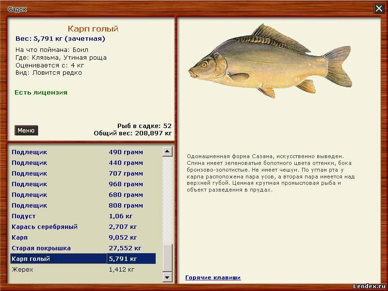 Ротан рыба можно ли ее есть