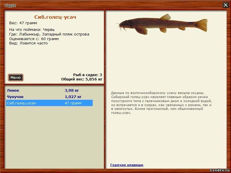 рыба усач как и где ловить