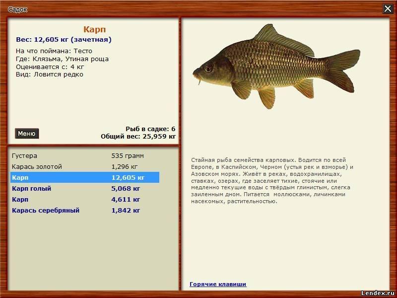 все что нужно для ловли рыбы
