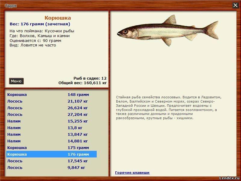как ловить рыбу по закону