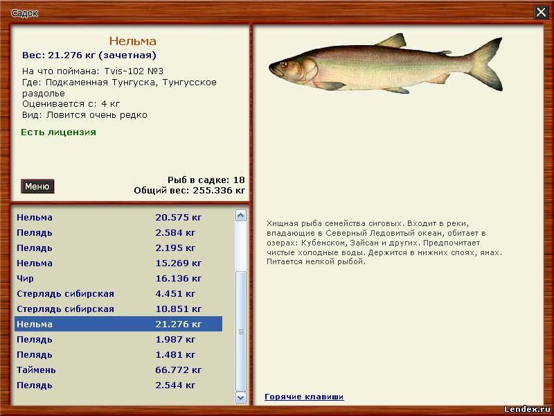 как расставлять ловушки  крупную рыбу да получи и распишись чем