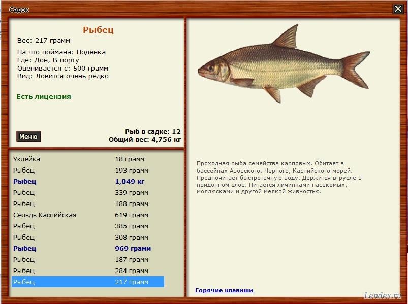 на что ловить рыбца в июне