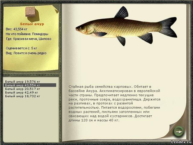 чем питается рыба на то и ловить