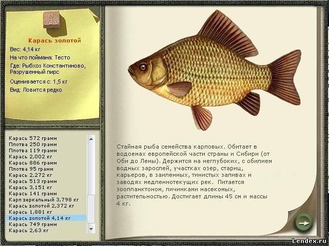 прикормка русская рыбалка 3.7 4