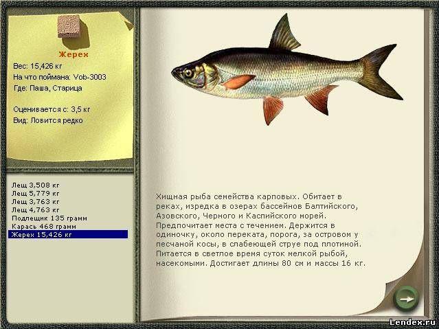 какие размеры рыб ловить
