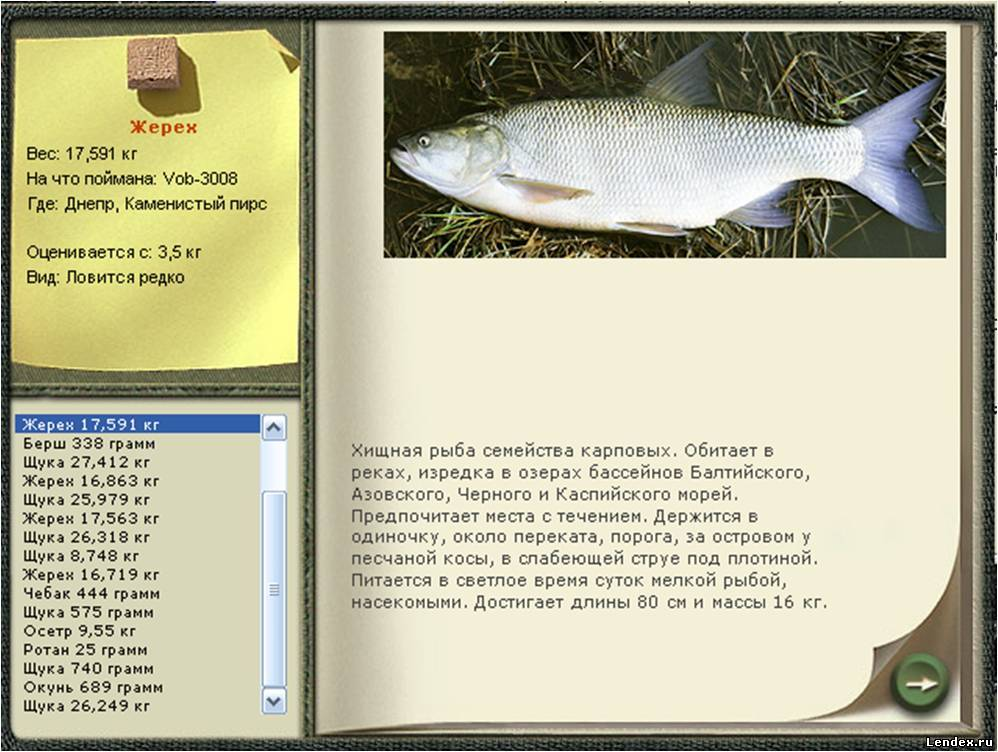 как ловить рыбу на косу