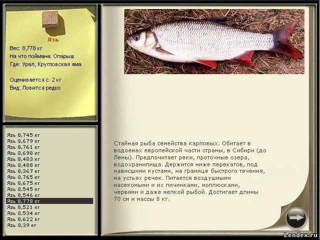 где и как лучше ловить рыбу